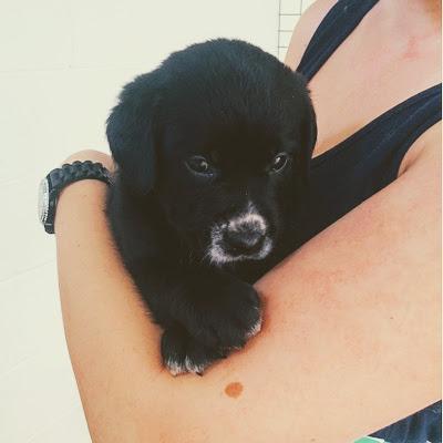 Noosa Pet Resort